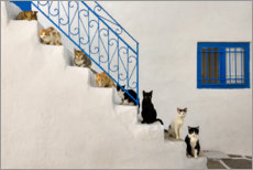 Lærredsbillede  Cats on stairs in Greece - Katho Menden