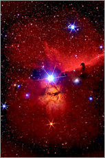 Print på aluminium  Horsehead Nebula in the constellation Orion - MonarchC