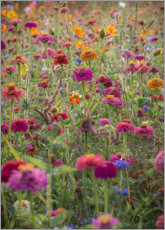Premium-plakat The colorful wild flowers of France