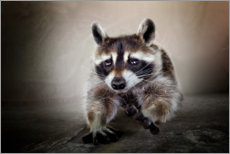 Premium-plakat Raccoon No. 3