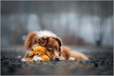 Premium-plakat Australian Shepherd with Teddy