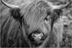 Print på aluminium  Highlander - Scottish Highland Cattle black and white - Martina Cross