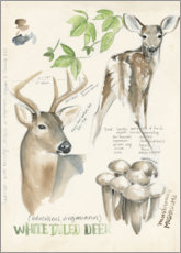 Lærredsbillede  Whitetailed deer & forest mushrooms - Jennifer Parker