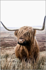 Lærredsbillede  Brown highland cattle - Art Couture
