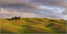 Premium-plakat Cypress group in Tuscany, Italy