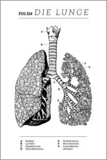 Lærredsbillede  Lungs Vintage Diagram (German) - Wunderkammer Collection