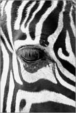 Akrylbillede  Eye of the zebra - Art Couture