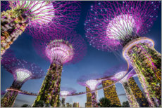 Premium-plakat  Supertrees in Singapore - Jan Christopher Becke