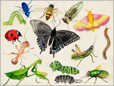 Selvklæbende plakat  The world of insects - Alicia Ludwig