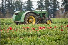 Selvklæbende plakat  Tractor on a tulip field