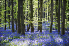 Selvklæbende plakat  Blue sea of flowers in the forest with light - The Wandering Soul