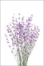 Akrylbillede  Fragrant lavender - Sisi And Seb