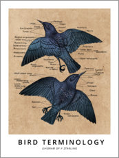 Premium-plakat Terms of ornithology (English)