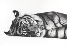 Akrylbillede  Sleeping tiger - Rose Corcoran