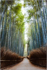 Akrylbillede  Bamboo forest in Kyoto - Matteo Colombo