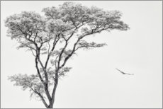 Premium-plakat Lonely tree and eagle