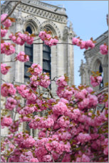 Premium-plakat Cherry blossoms in front of Notre Dame