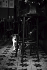 Premium-plakat French bistro with a small dog