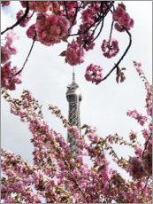 Akrylbillede  Eiffel Tower top and cherry blossoms - Carina Okula