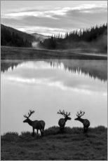 Akrylbillede  Rocky Mountain National Park - Jaynes Gallery