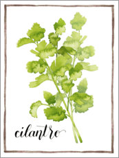Akrylbillede  Herbal illustration Cilantro - Grace Popp