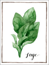 Akrylbillede  Herbal illustration sage - Grace Popp