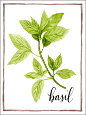 Akrylbillede  Herbal illustration Basil - Grace Popp