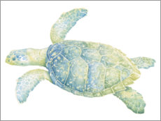 Akrylbillede  Tranquil sea turtle - Megan Meagher