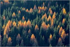 Premium-plakat Forest with larches and spruces