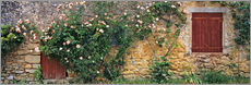 Galleritryk  Climbing roses on old stone wall - Ric Ergenbright
