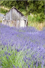 Galleritryk  Lavender field and scales - Janell Davidson