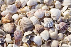 Galleritryk  Shell collection - Rob Tilley