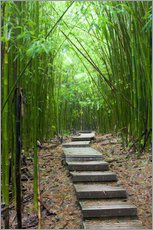 Galleritryk  Wooden path in the bamboo forest - Jim Goldstein