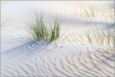 Galleritryk  Dunegrasses in the sand - Jürgen Klust