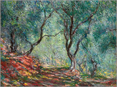 Selvklæbende plakat  Olive Tree Wood in the Moreno Garden - Claude Monet