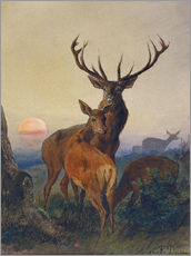Selvklæbende plakat  A Stag with Deer at Sunset - Charles Jones