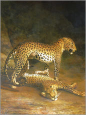 Galleritryk  Two Leopards lying in the Exeter Exchange - Jacques Laurent Agasse