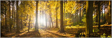 Galleritryk  Autumn forest backlit with sunshine and yellow autumn leaves - Jan Christopher Becke