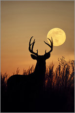 Galleritryk  Whitetail Deer with full moon - Larry Ditto