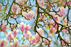 Galleritryk  Magnolias look in the Spring - Julia Delgado