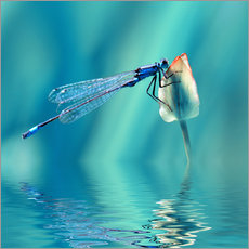 Galleritryk  Dragonfly with Reflection - Atteloi