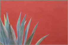 Selvklæbende plakat  Agave in front of red wall - Don Paulson