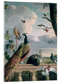 Akrylbillede  Palace of Amsterdam with exotic birds - Melchior de Hondecoeter