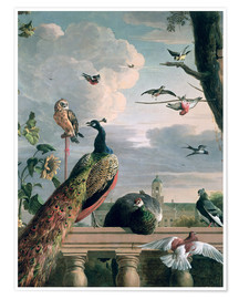 Premium-plakat  Palace of Amsterdam with exotic birds - Melchior de Hondecoeter