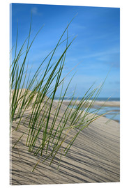 Akrylbillede  Dune grasses before playscape - Susanne Herppich