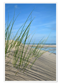 Premium-plakat  Dune grasses before playscape - Susanne Herppich