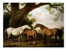 Premium-plakat Two Shafto Mares and a Foal