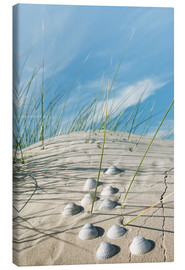 Lærredsbillede  Dune with sea shells - Reiner Würz