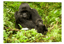 Akrylbillede  Gorilla with baby in the green - Joe & Mary Ann McDonald