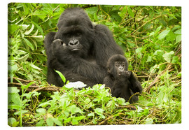 Lærredsbillede  Gorilla with baby in the green - Joe & Mary Ann McDonald